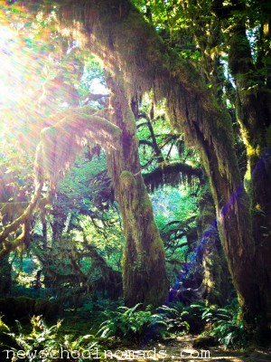 sun rays hoh rainforest wa
